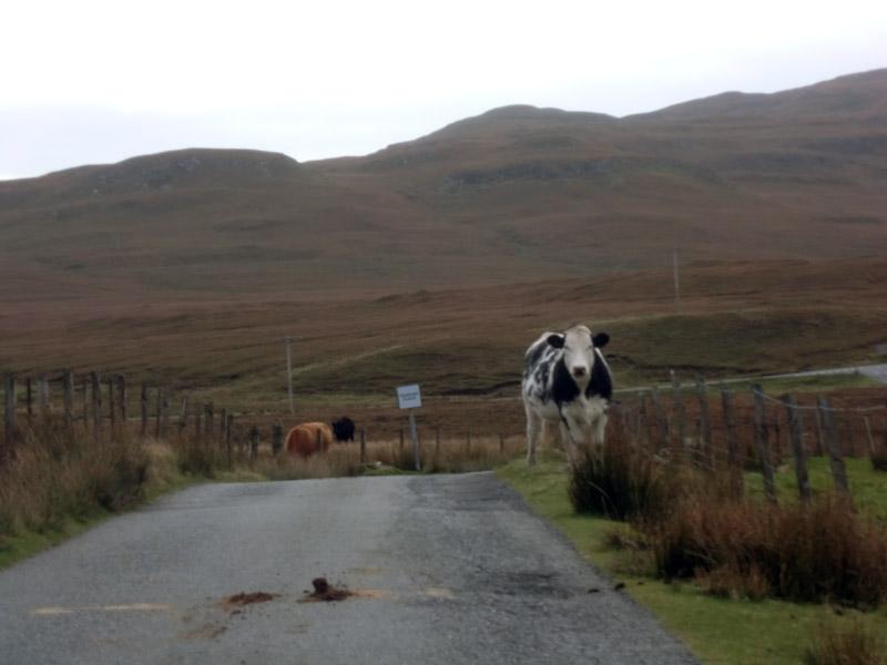 Bleibt die Kuh stehen, ist alles gut