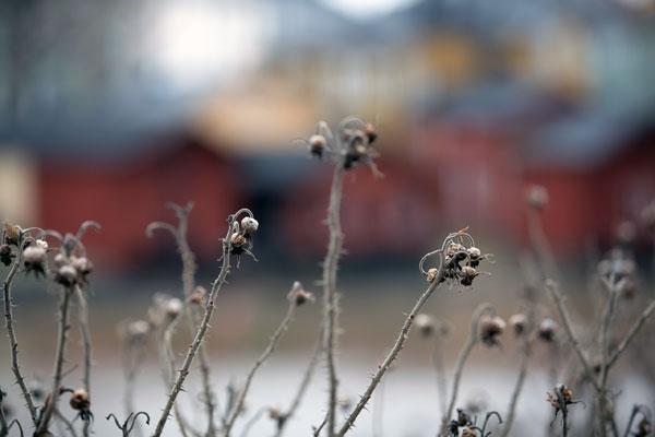 Porvoo: Die Altstadt Helsinkis – irgendwo in Italien