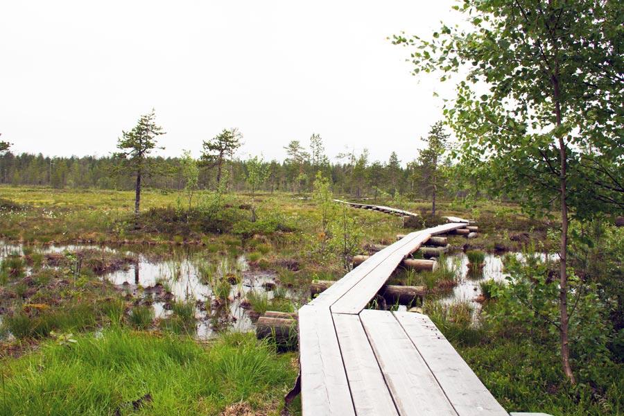 Wald bei Rovaniemi