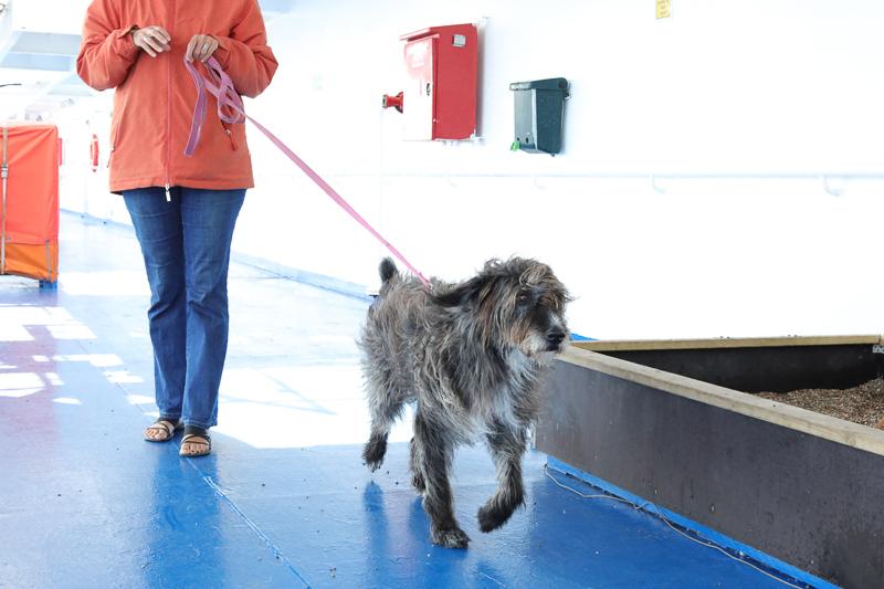Gassi gehen auf dem Schiff: Hund an der Sandkiste