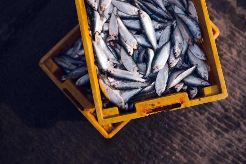 Fischerei - enge Zusammenarbeit zwischen Färöer und Russland