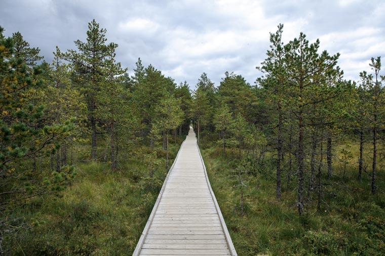 Holzweg durch die Moorlandschaft, Lahemaa