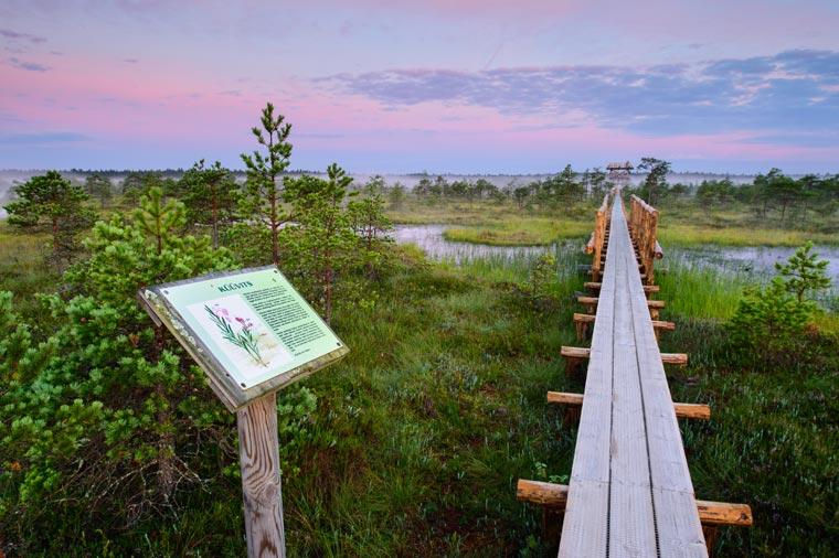 Wandern im Männikärve-Sumpf (Sven Zacek)