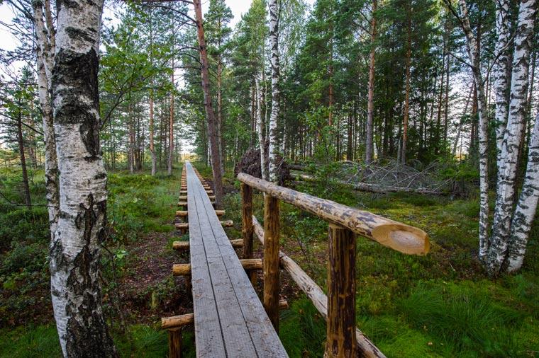 Im Sumpf von Männikärve (Foto Sven Zacek)