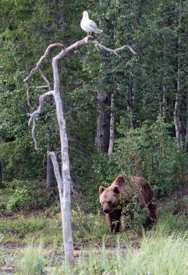 Bär und Möwe