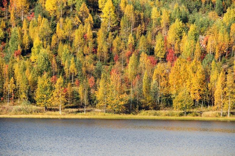 Ruska in Finnland