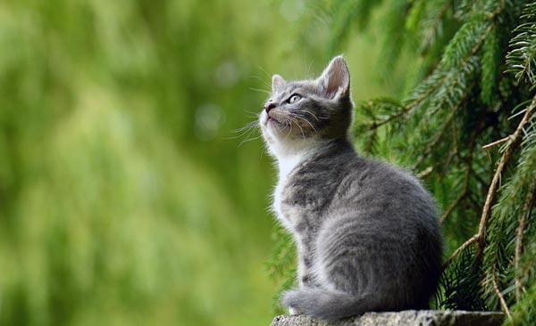 Katzen beugen Asthma bei Neugeborenen vor