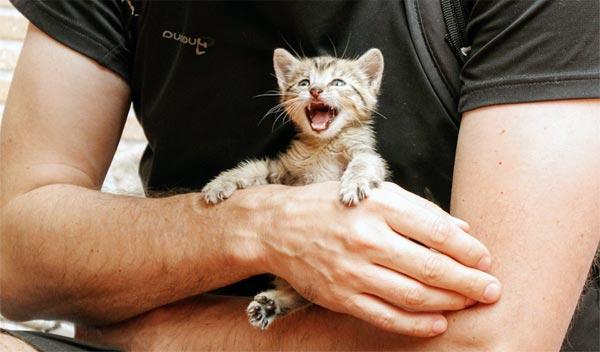 Schwedische Regierung will Rechte von Katzen stärken
