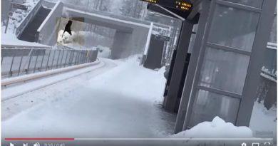 Elch fällt auf Gleise Oslo