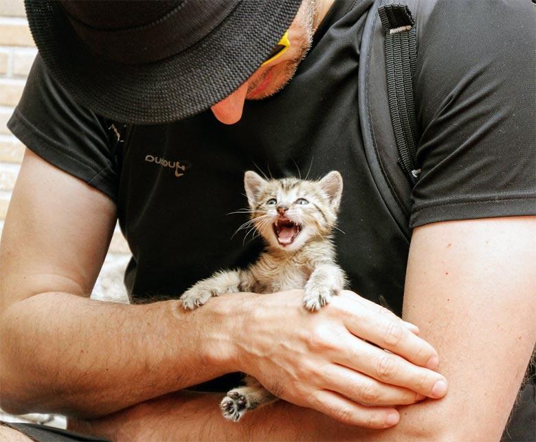 Neues Tierschutzgesetz Schweden