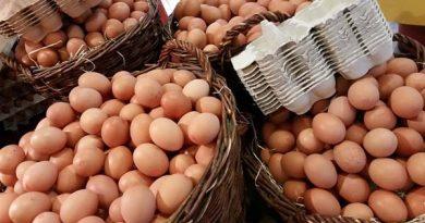 Pyeongchang: 15.000 Eier für die norwegische Olympiamannschaft geliefert