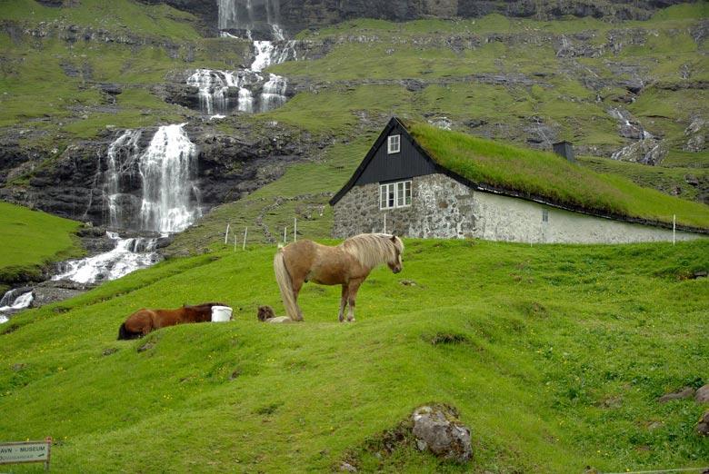Färöerpony