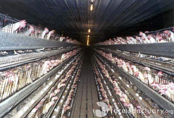 Hühnerstall brennt in Norwegen ab