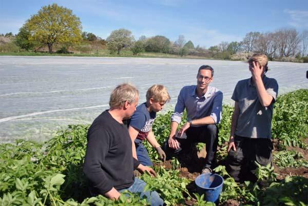 Verteigerung Kartoffeln Schweden