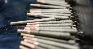 Legalisierung Cannabis Dänemark