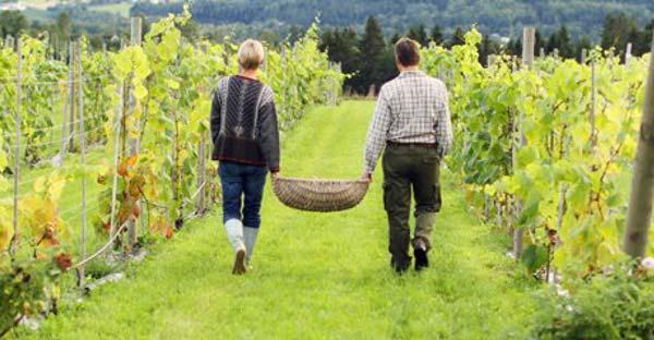 Weinanbau Norwegen