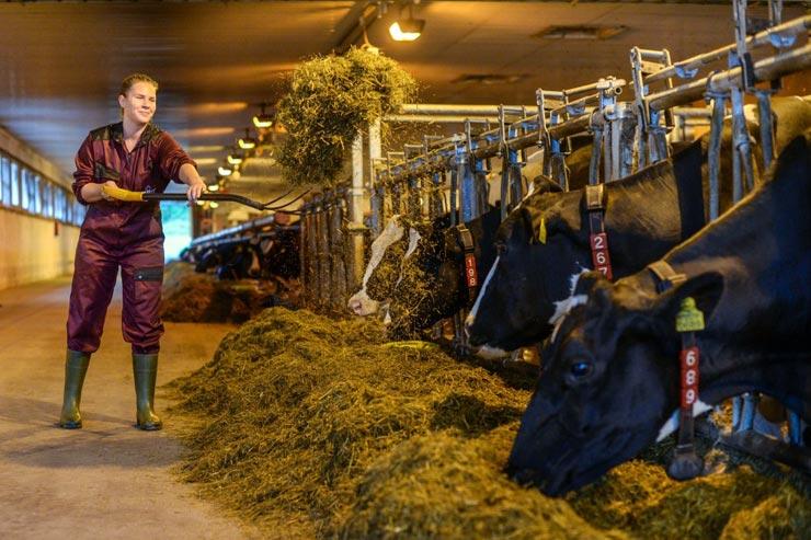 Reisebericht Milchbauernhof Harjulan