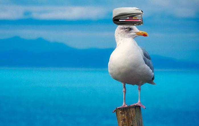 Möwe klaut Brieftasche Island