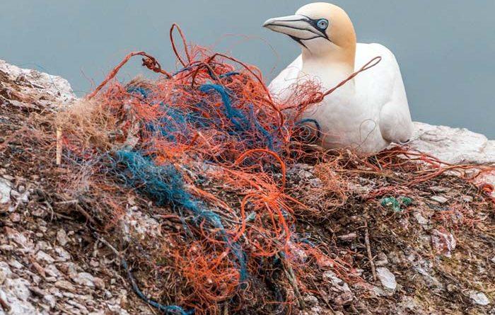 Tausende Färöer sammeln Plastikmüll in ihrer Freizeit