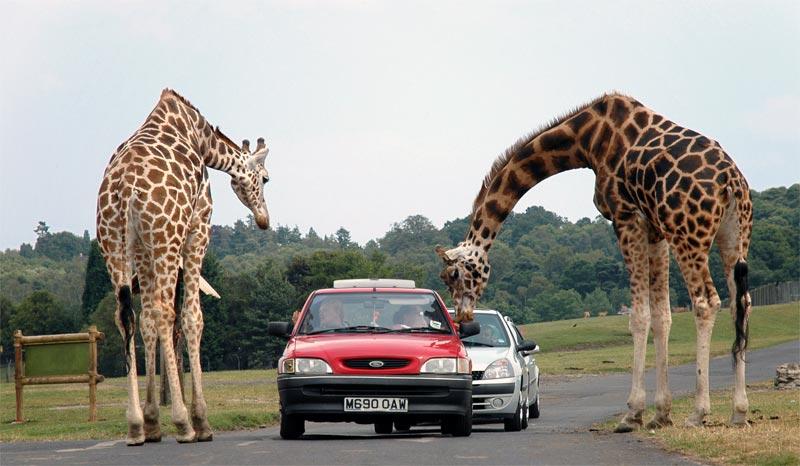 West Midland Safari Park, Worcestershire