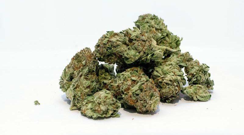 Cannabis Preisindex