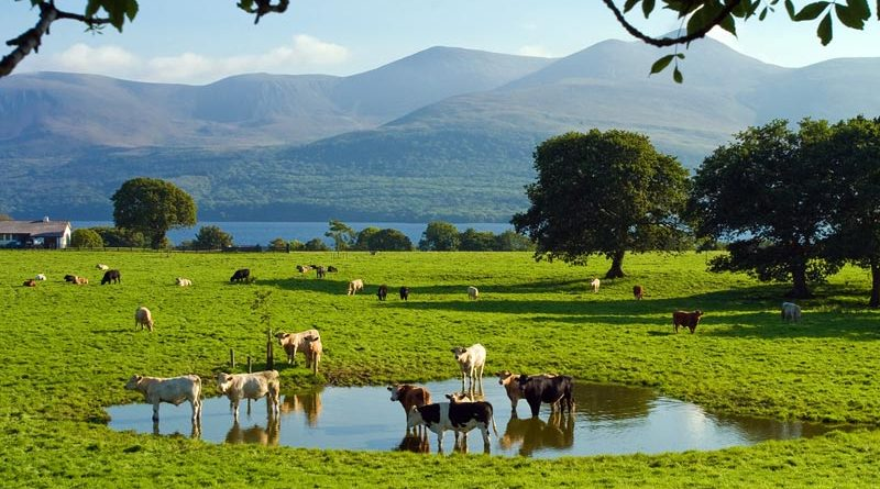 Killarney Nationalpark – Irlands landschaftlicher Höhepunkt