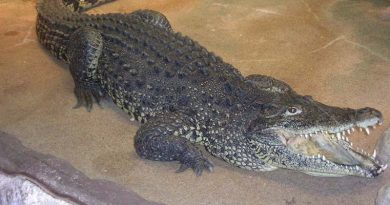 Stockholm: Krokodil beißt Mann
