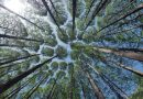 Spendengala in Dänemark sammelt Geld für 1 Mio. neue Bäume