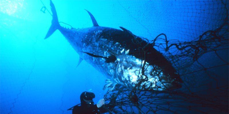 Restaurant in Norwegen kauft den teuersten Fisch der Welt für kleines Geld