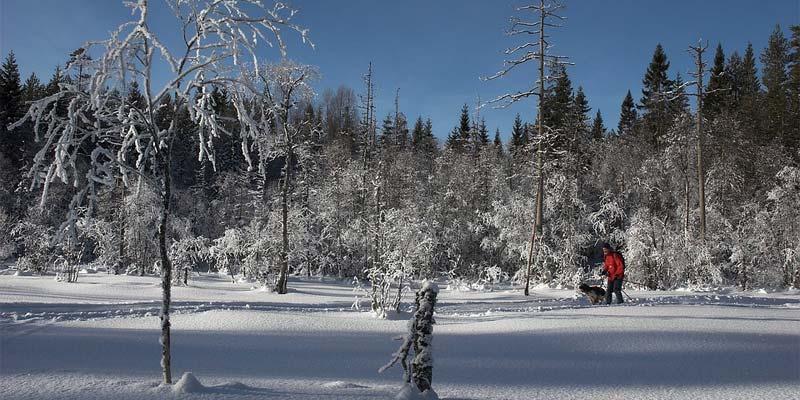 Schneemenge Norwegen 2050