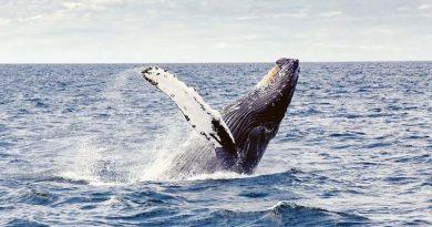 Urlaubstipp: Whale watching in Island