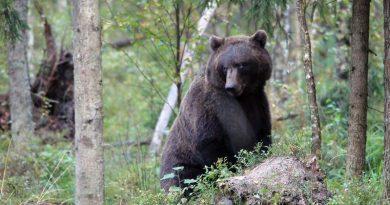 Bären Tallinn