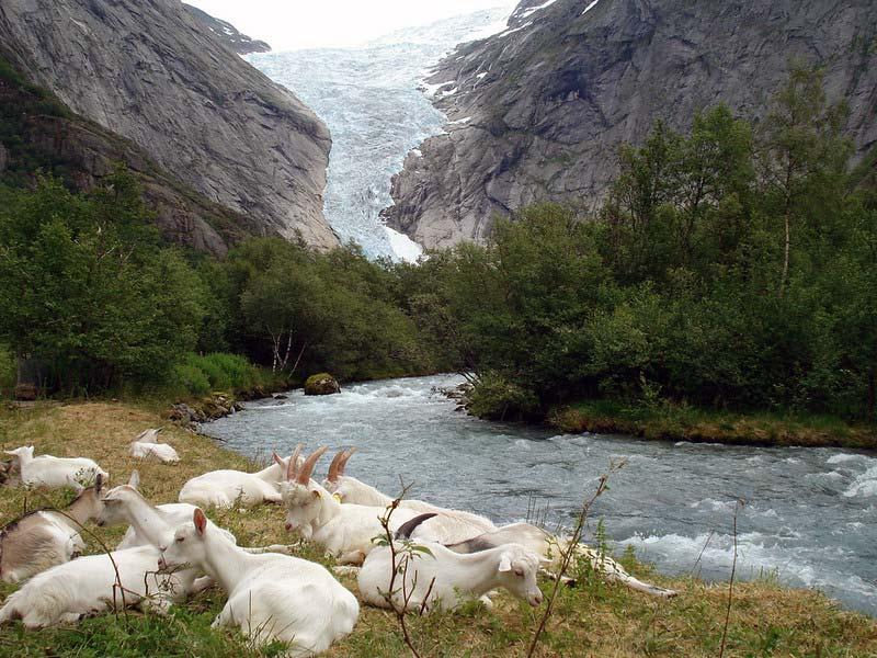 Gletscherwanderung Norwegen