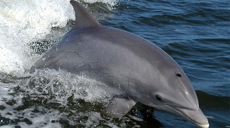 Delfine Finnland