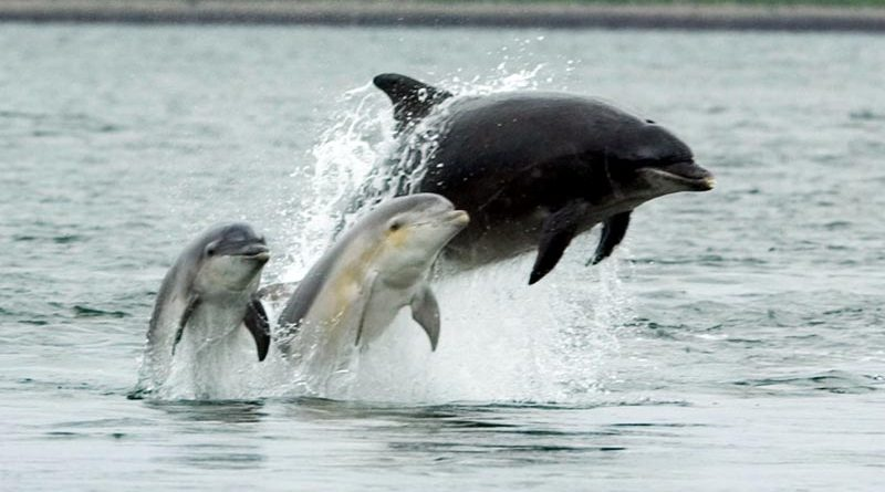 Delfine Osstsee Finnland.