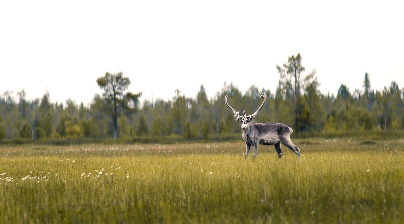 finnland urlaub restart