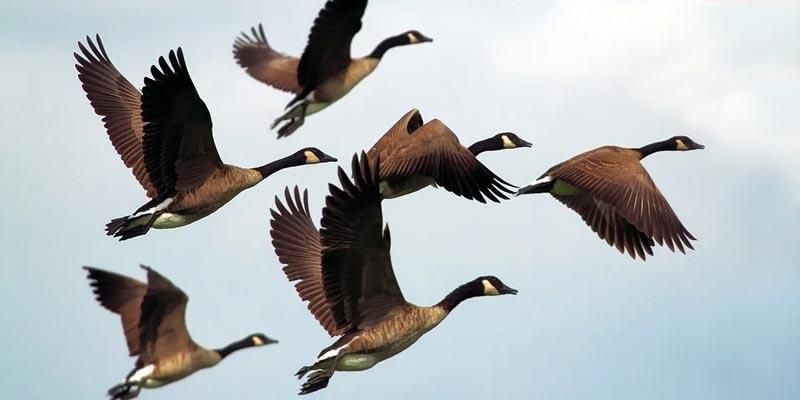 Studie Klimawandel Vögel Brut