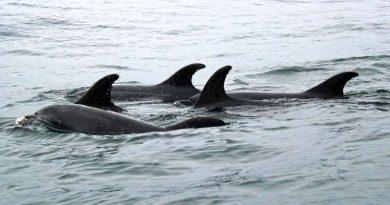 Delfin Spotting Schottland