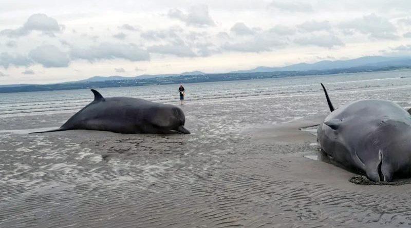 Wale Irland