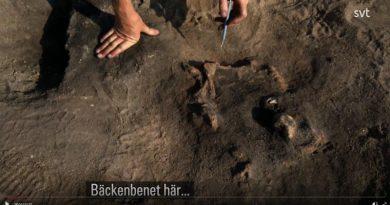 Hund Mensch Steinzeit