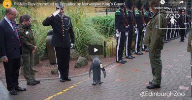 Pinguin General Norwegen