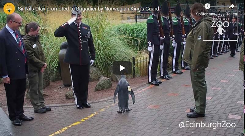 Pinguin General Norwegen