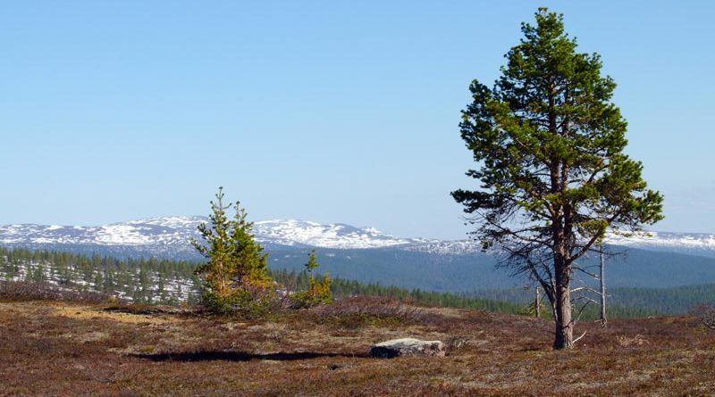 Urho Kekkonen Nationalpark Lappland