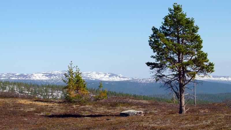 Urho Kekkonen Lappland