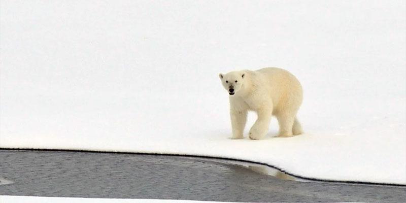 Dänische Forscher: Arktisches Meereis auf einem Rekordtief für Oktober