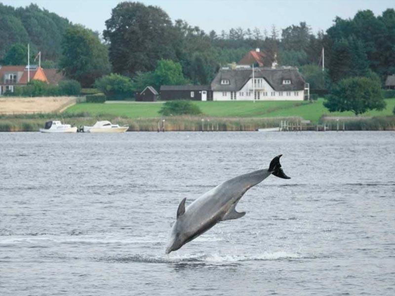 Delfin Yoda