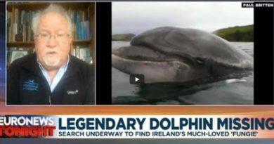 Delfin Fungie Irland