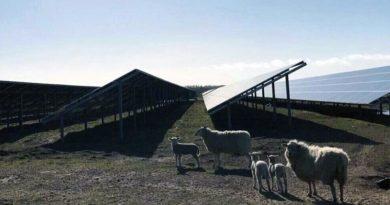 Solarpark Dänemark