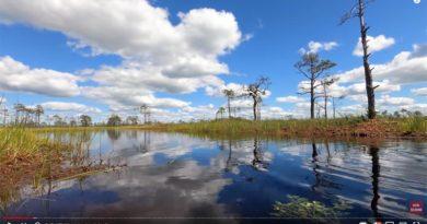 Reisebericht Doku Estland