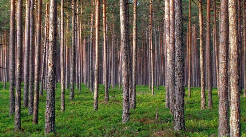 Waldrodung für Pellets